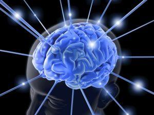 El Cerebro y la Vitamina D